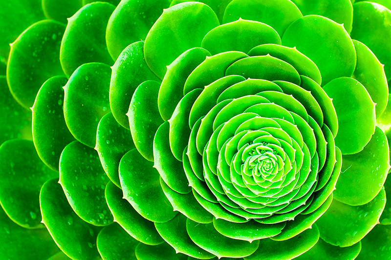 Index Of Bschauer Datasets Google 512 Images Green Color